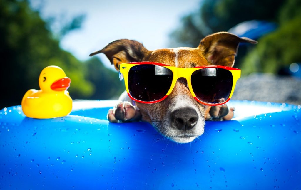 5 Tips to Keep Your Dog Cool This Summer